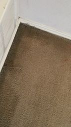 Before & After Carpet Stain & Mold Removal in Elgin (4)