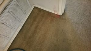 Before & After Carpet Stain & Mold Removal in Elgin (1)
